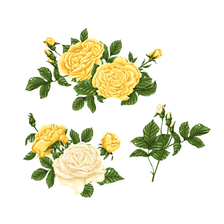 Set of yellow and white roses bouquets flowers. Vector illustration.