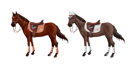 Set of horses of different suits in different ammunition for jumping - saddle, cap, bridle, halter, wagtrap, stamping. Riderless. Vector illustration. Stock Illustratie