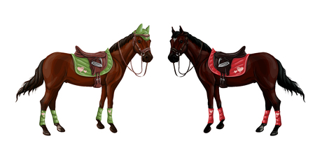Set of horses of different suits in different ammunition for jumping - saddle, cap, bridle, halter, wagtrap, stamping. Riderless. Vector illustration. Illustration