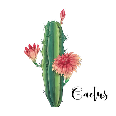 Cactus in desert vector and illustration, hand drawn style, isolated on white background. Vector illustration
