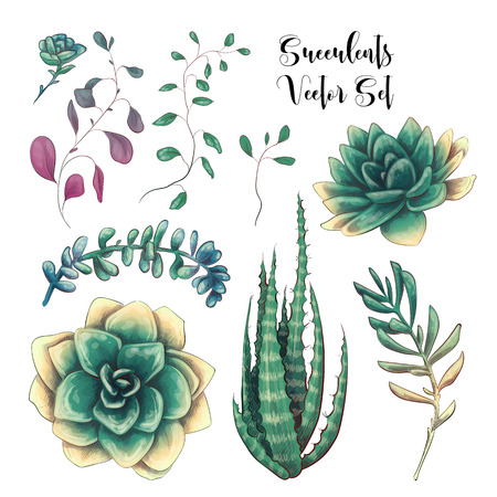 Green colorful succulent bouquets vector design objects. All elements are isolated and editable