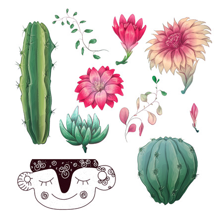 Potted cacti and succulents plants badge collection set. Vector design illustration.