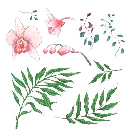 Orchidee tropische Blumen florale Elemente in der Hand zeichnen Stil. Vektor-Illustration