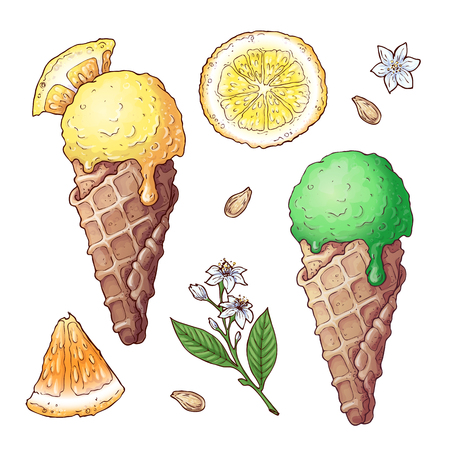 Set of citrus ice cream. Vector illustration