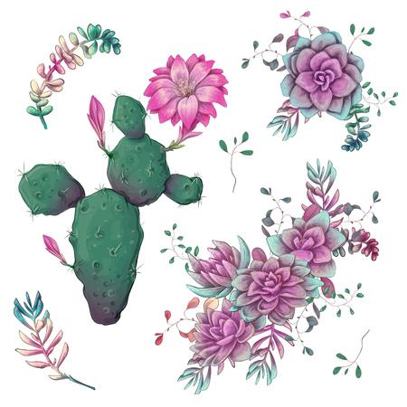 Succulentes. Cactus dessinés à la main sur un fond blanc. Fleurs dans le désert. Plantes succulentes de dessin vectoriel.