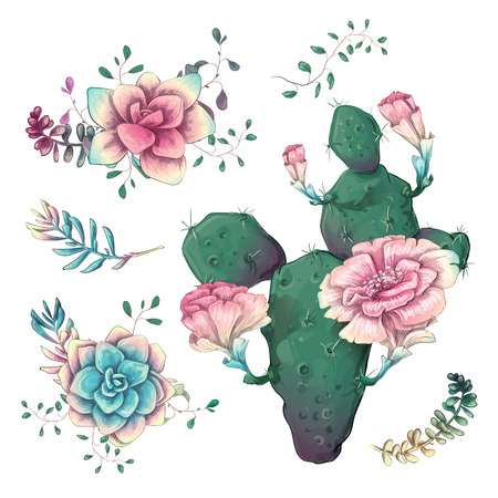 Succulents. Cacti hand drawn on a white background. Flowers in the desert. Vector drawing succulents.