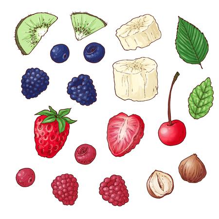 Conjunto de frutos secos de plátano kiwi de bayas silvestres. Ilustración vectorial