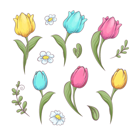 Set flowers tulips. Hand drawing. Vector illustration