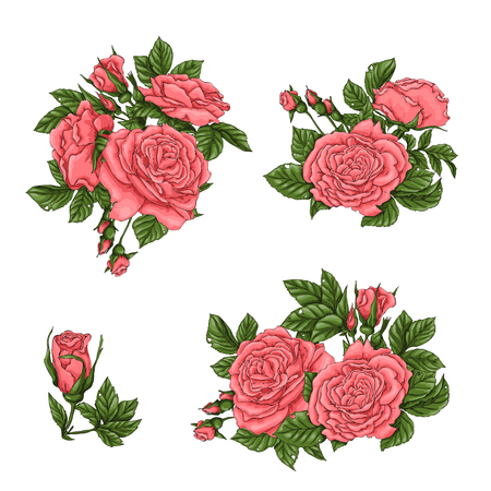 Set of coral roses. Hand drawing Vector illustration. Çizim