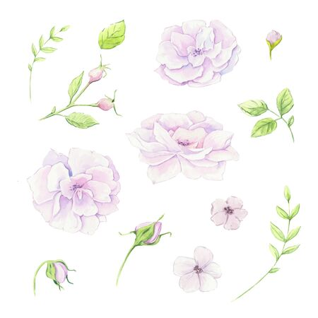 Watercolor floral set with delicate white flowers and tea rose