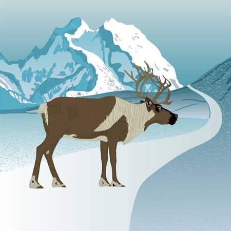 Wild reindeer. Caribou. Animals of Alaska.  Vector.