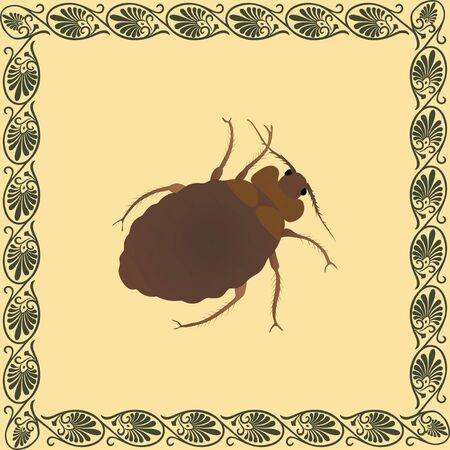 Bed bug color illustration in greek palmetta ornament frame. Vector.