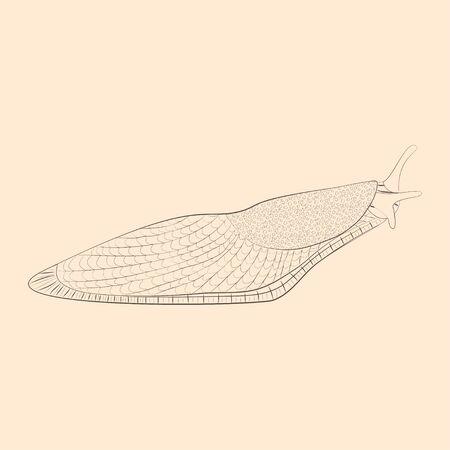Slug illustration. Hand drawn isolated sketch. Vector.