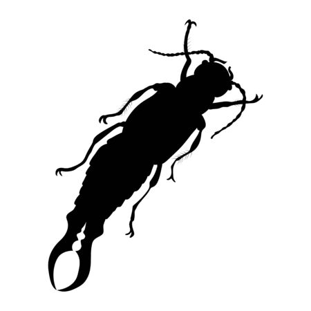 Earwig silhouette isolated on white background. Vector. 向量圖像