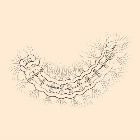 Silkworm caterpillar illustration. Hand drawn isolated sketch. Vector.