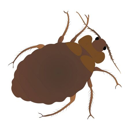 Bed bug color illustration isolated on white background. Vector.