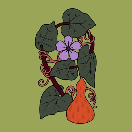 Lagenaria. Calabash pumpkin. Stylized vintage branch with a flower and a pumpkin. Vector.