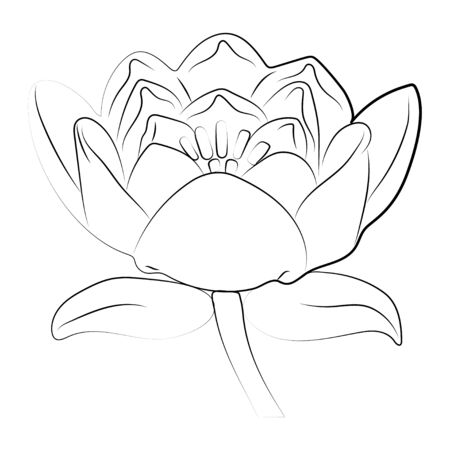 Lotus flower and leaves. Design for natural cosmetics, health care. Vector. Illustration