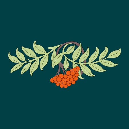 Rowanberry. Rowan branch with leaves and berries. Autumn design. Vector. Ilustrace