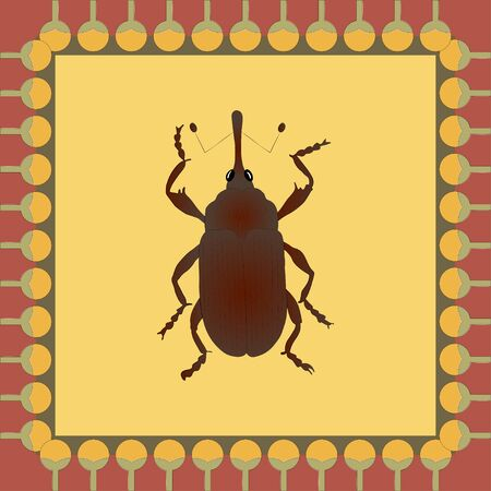 Cotton weevil color illustration in egyptian ornament frame. Vector.