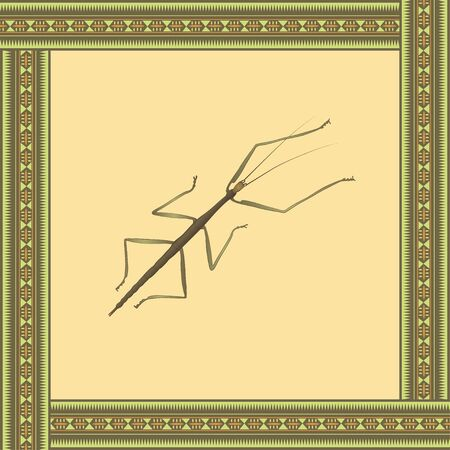 Bug stick color illustration in african ornament frame. Vector.  向量圖像