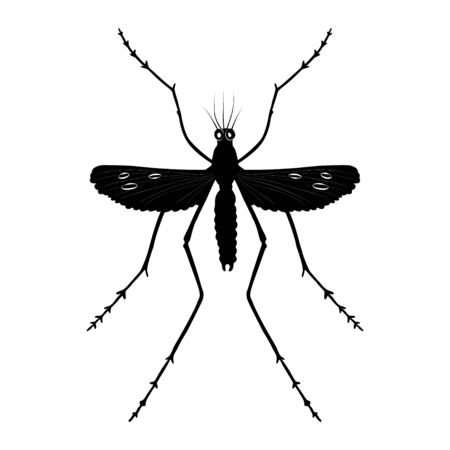 Mosquito silhouette isolated on white background. Vector.