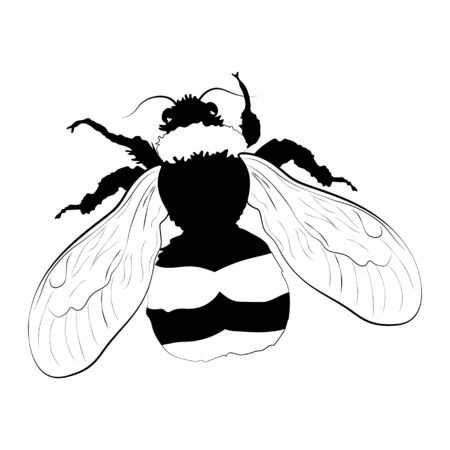 Bumblebee silhouette isolated on white background. Vector. Banque d'images - 140908647