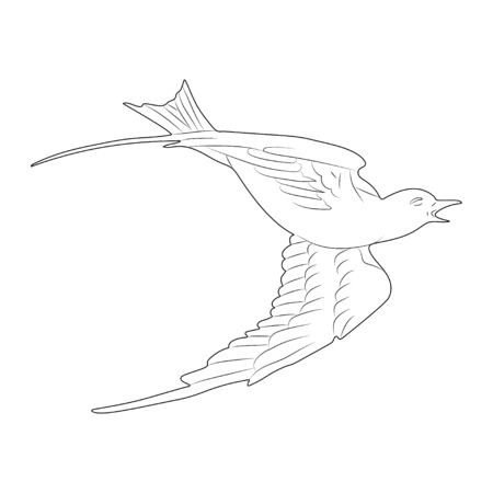 Flying white dove. Hand drawn isolated sketch. Vector.