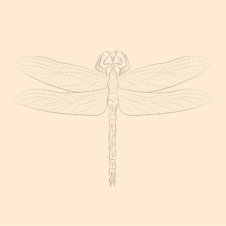 Dragonfly illustration. Hand drawn isolated sketch. Vector.