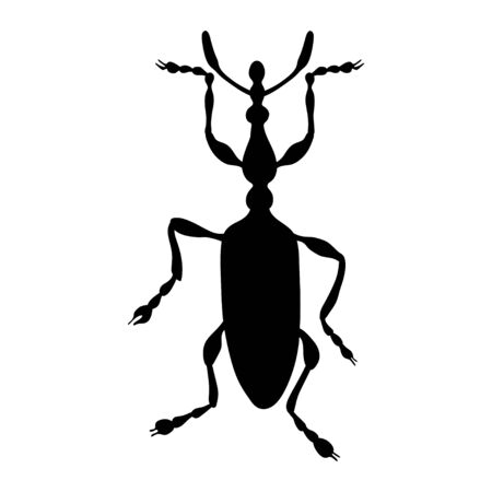 Weevil silhouette isolated on white background. Vector. Illustration