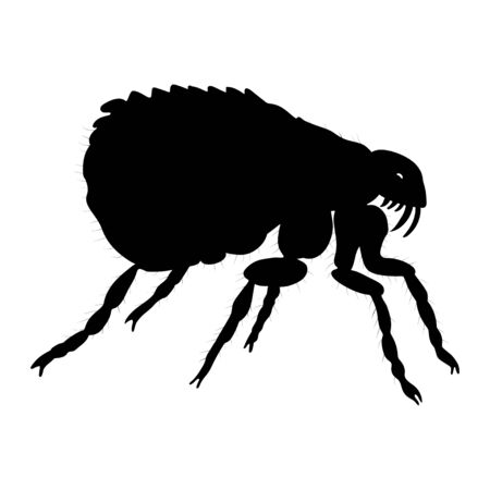 Flea silhouette isolated on white background. Vector. Illustration