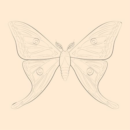 Graellsia isabellae illustration. Hand drawn isolated sketch. Vector. Banque d'images - 144067570