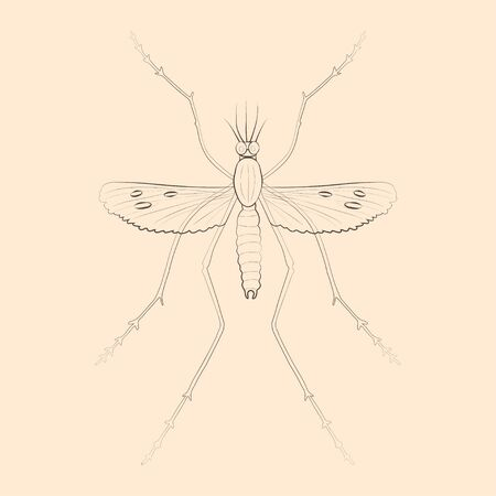 Mosquito illustration. Hand drawn isolated sketch. Vector. Illustration