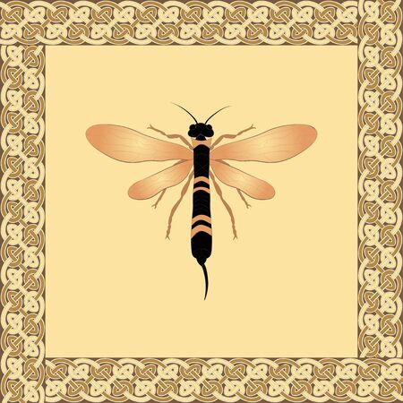 Siricidae color illustration in celtic ornament frame. Vector.