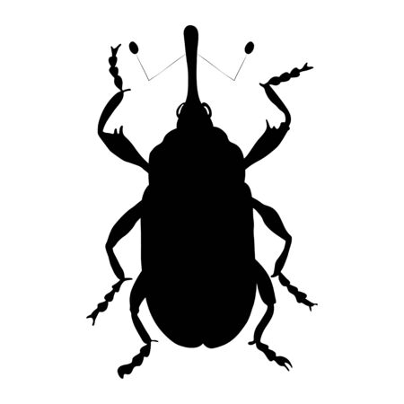 Cotton weevil silhouette isolated on white background. Vector. Banque d'images - 146175188