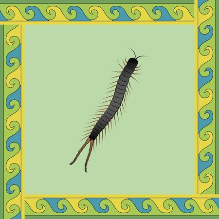 Scolopendra color illustration in mexican ornament frame. Vector. Banque d'images - 146175189