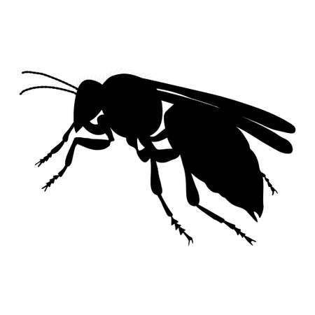 Hornet silhouette isolated on white background. Vector.