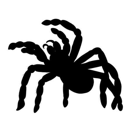 Tarantula silhouette isolated on white background. Vector. Ilustração