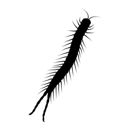 Scolopendra silhouette isolated on white background. Vector.