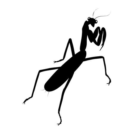 Mantis silhouette isolated on white background. Vector. Ilustração