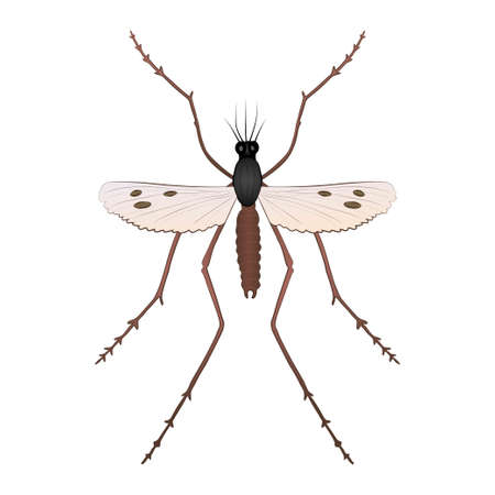 Mosquito color illustration isolated on white background. Vector.