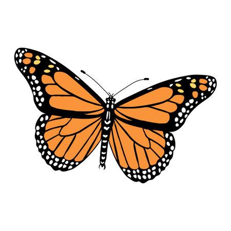 Danaus plexippus color illustration isolated on white background. Vector.