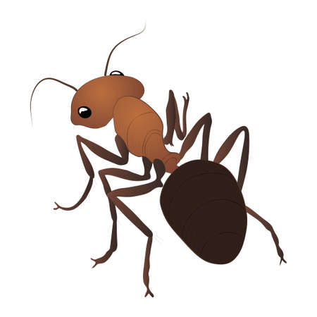 Ant color illustration isolated on white background. Vector.