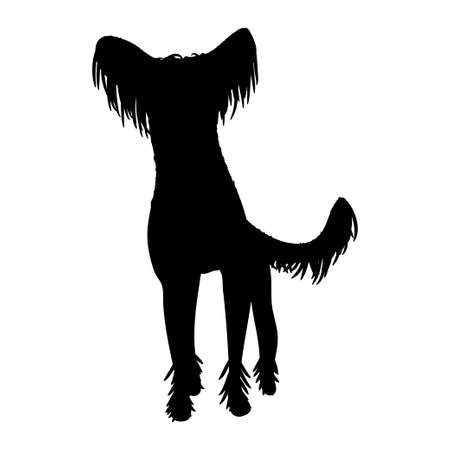 Chinese-crested dog on white background. Vector.