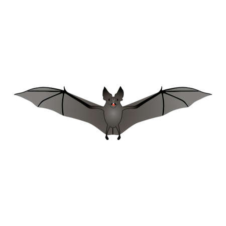 Bat isolated on white background. Vector.