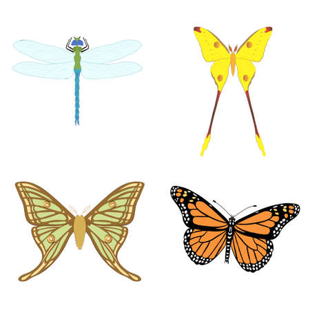 Set with insects isolated on white background. Danaus plexippus, Argema mittrei, Graellsia isabellae and Dragonfly. Element for design. Vector Vetores