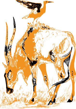 antelope: Antelope and bird Illustration