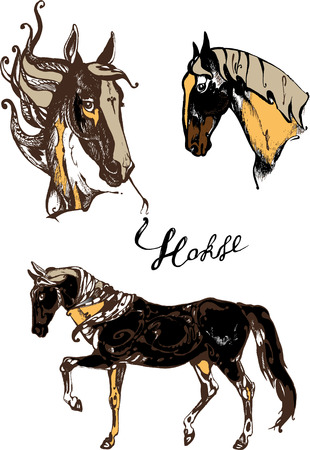 gee: Pinto horse Illustration