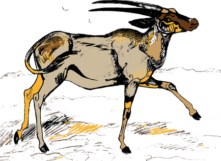 african grey: Antelope oryx