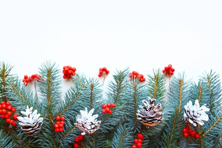spruce branches with rowan berries and pine cones on white background, copy space